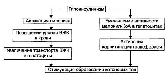 Образование кетоновых тел