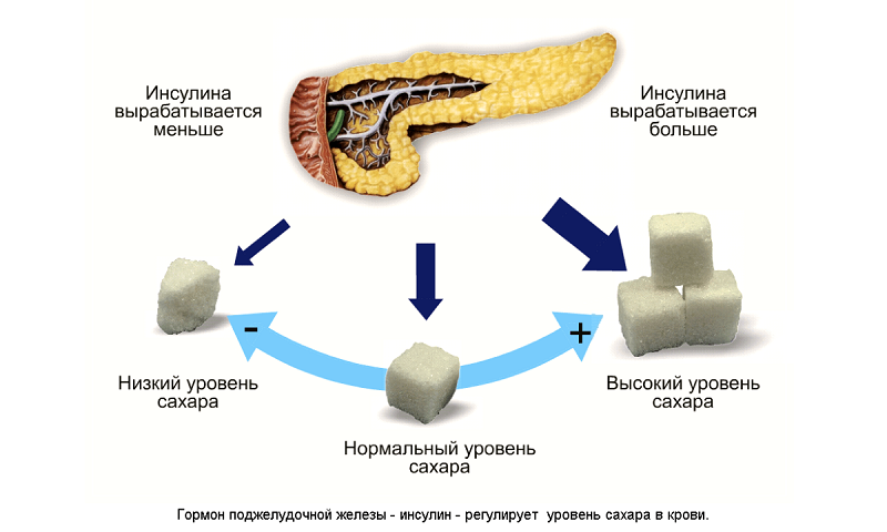 Взаимосвязь инсулина и сахара в крови