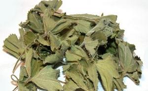 манжетка лечебные свойства и противопоказания,трава манжетка лечебные свойства и противопоказания,манжетка трава применение,трава манжетка лечебные свойства,трава манжетка при сахарном диабете