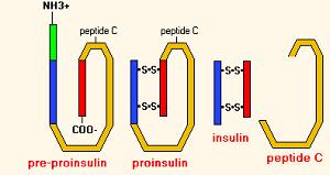 Анализ на с-пептид