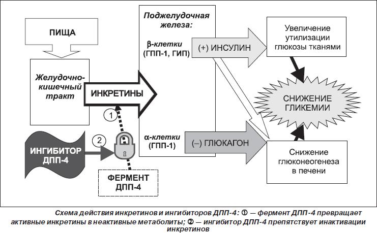 Схема действия инкретинов