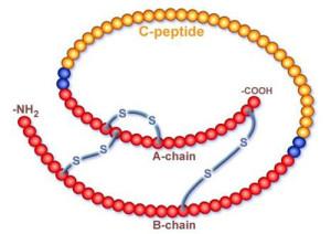 Молекула с-пептида