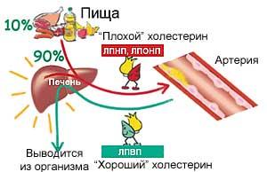 Действие холестерина