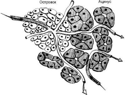 Ткани железы