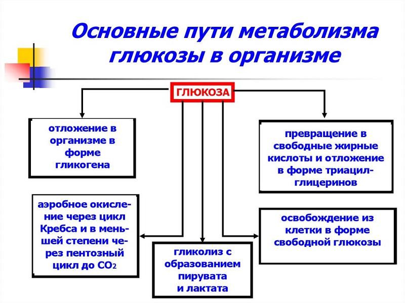 Метаболизм глюкозы
