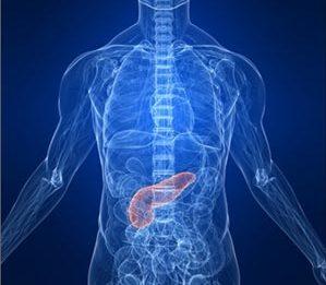 Поджелудочная железа в организме
