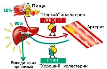 Действие разных форм холестерина