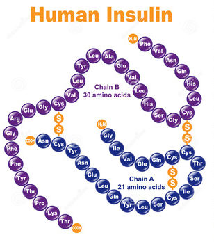 Человеческий инсулин