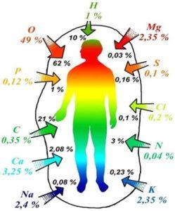 Микроэлементы в организме человека