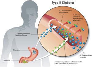 Секреция инсулина
