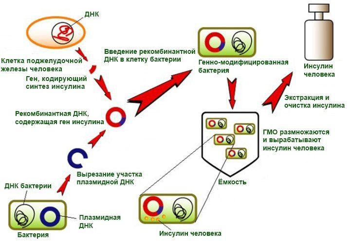 Производство инсулина