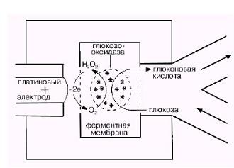 Принцип действия электрохимического глюкометра