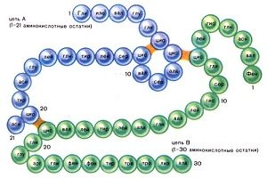 Молекула инсулина