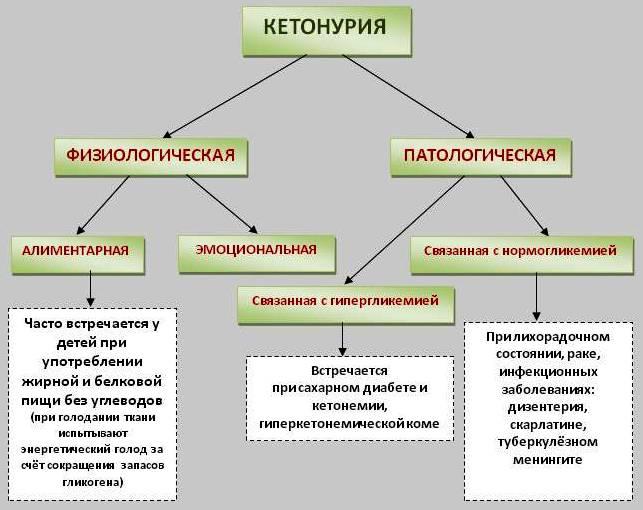 Виды кетонурии