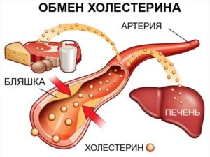 Обмен холестерина в организме