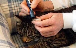 Замер гликемии у кошки