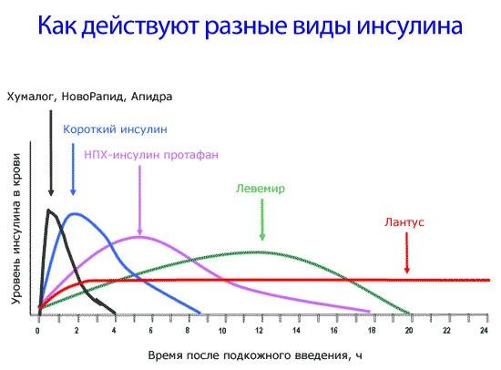 Действие различных видов инсулина