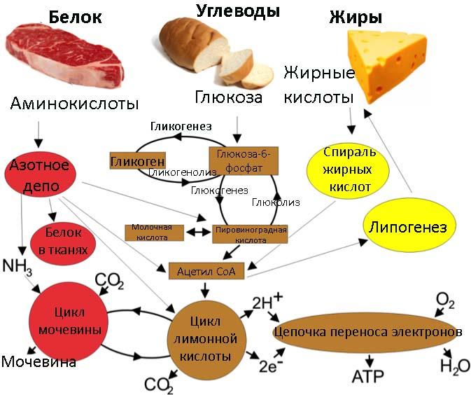 Схема обмена