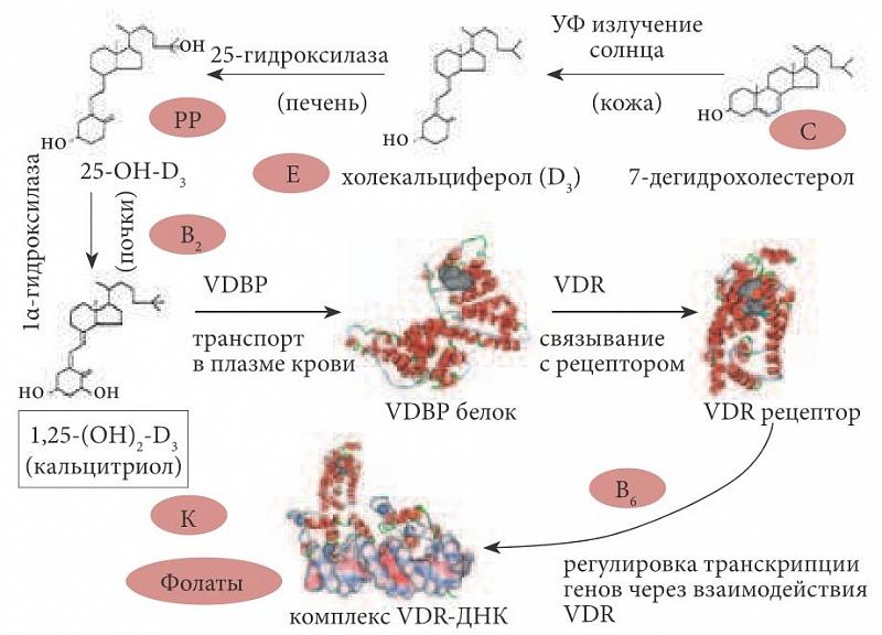 Витамины в метаболизме