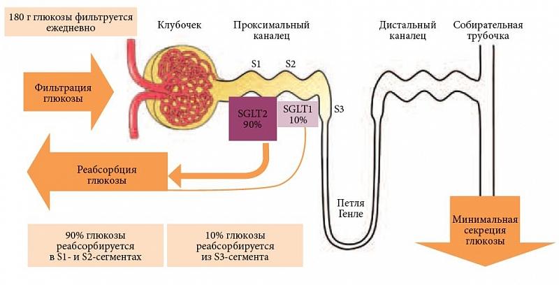 Фильтрация глюкозы