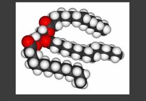 Строение молекулы триглицеридов