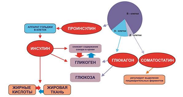 Основные виды гормонов